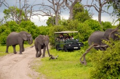 South Africa, elephant safari