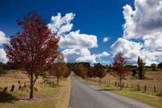 Tenterfield, road, autumn, trees