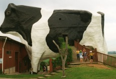 The Big Cow, Wauchope