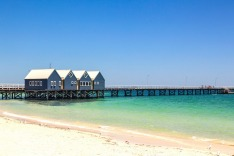 "The Busselton jetty is under threat from ""termites of the sea""."