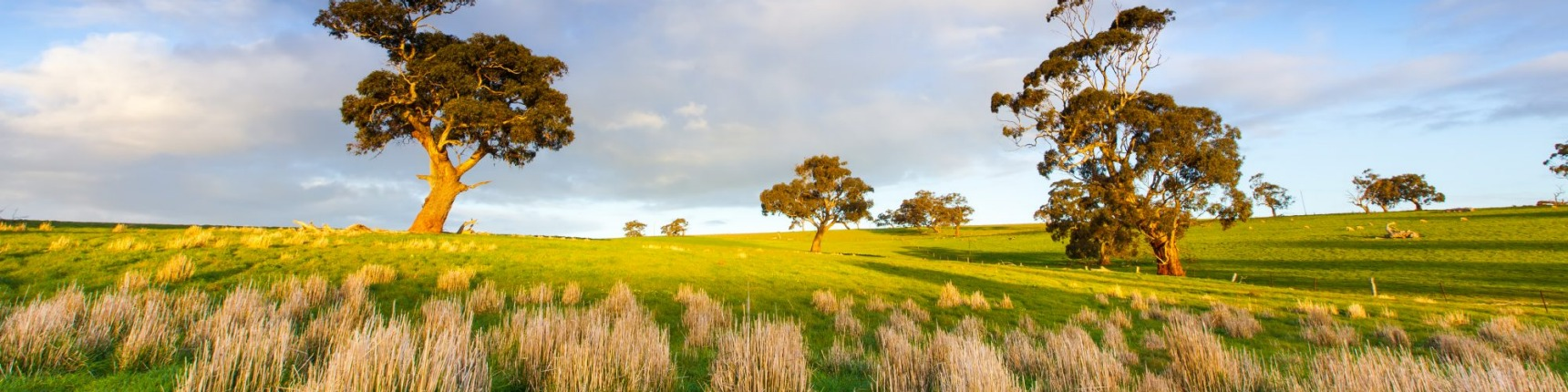 South Australia, countryside
