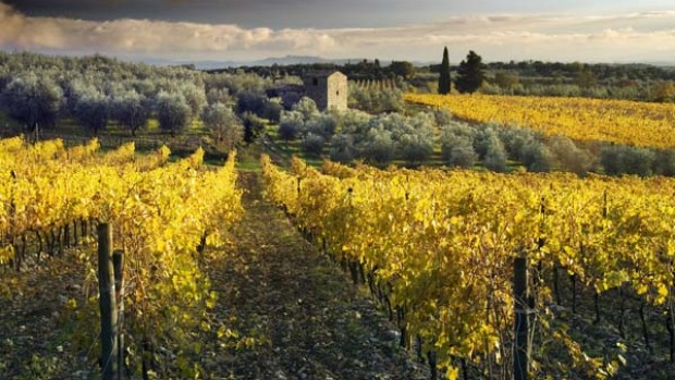 La dolce vita ... the famed vineyards of Chianti.
