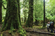 Tarkine Trails, Rainforest Track, Tasmania.