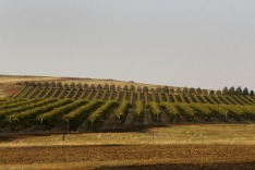 Winery - Heathcote