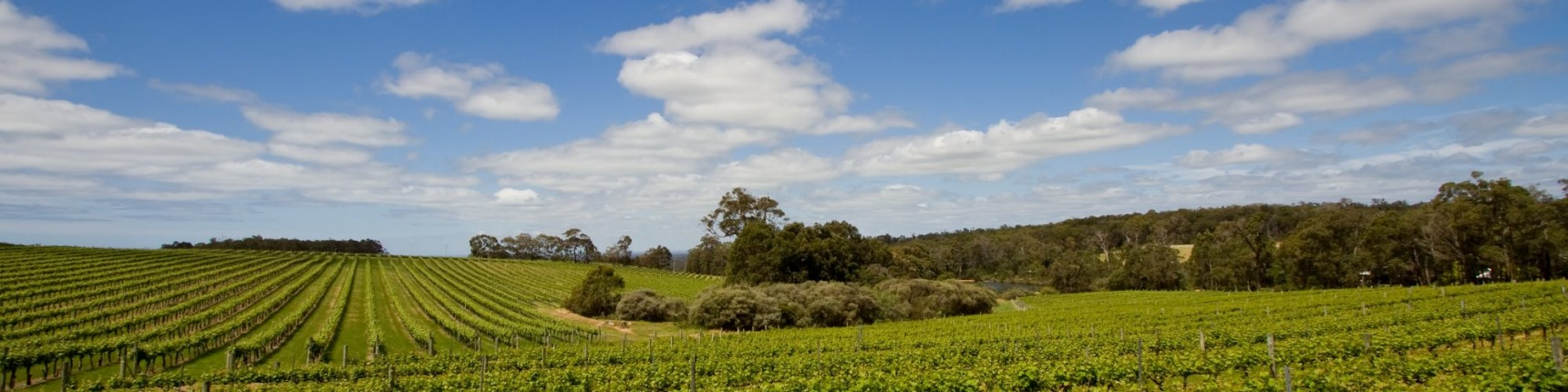 perth and surrounds vineyard