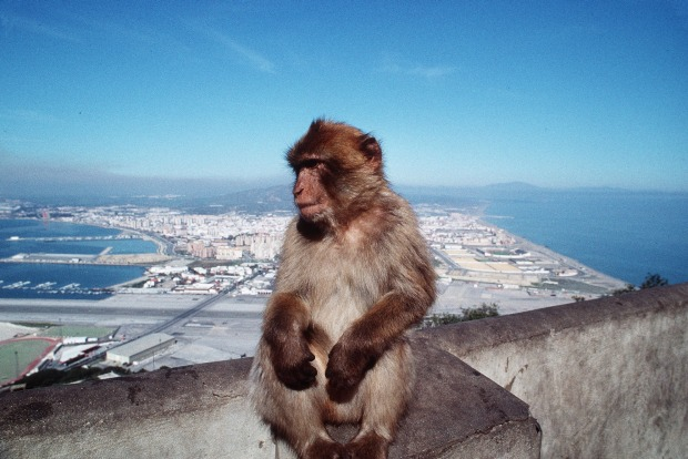 Gibraltar (6 square km. Population: 30,000). Gibraltar is famous for two things: its huge landmark rock that dominates ...