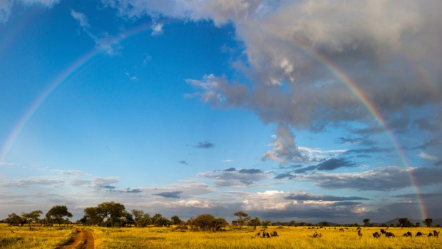 Circle of life ... the Masai Mara, Kenya.