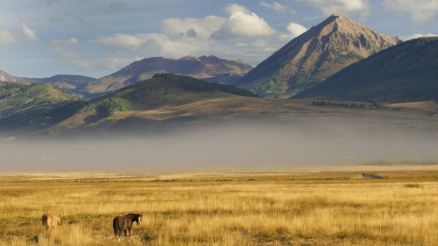 Rare beauty: Horses in the fog, near Crested Butte, Colorado.