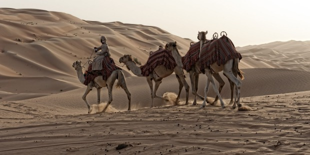 <b>Photo nine: Dunes</b><br> The amateur says: As the keepers started their way back to house the camels, the sun came ...
