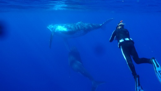 For divers, the visibility is exceptional, with humpback whales among the sightings.
