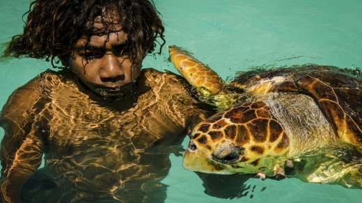 Close contact: If the turtles are feeling friendly, you can join them for a swim as shown by this boy with a loggerhead ...