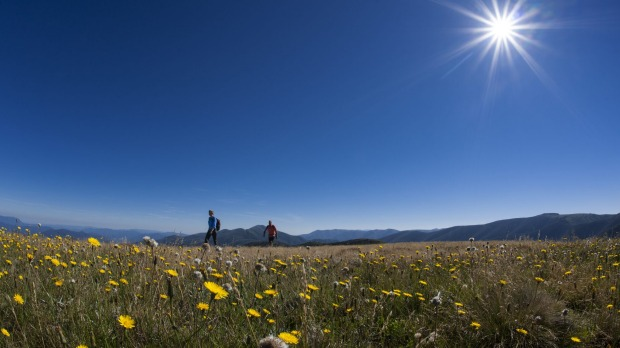 Alp and away: Hikers walk past wildflowers in Victoria's Alpine National Park.