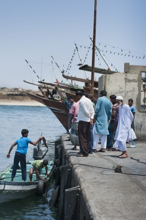 Bangladeshi fishermen landing some shark at dock in Mirbat, while an elderly local looks on.