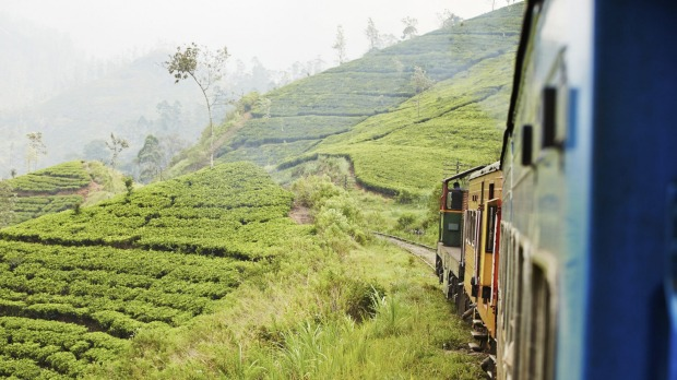 Hill view: A passenger train wends its way along tea-clad slopes.