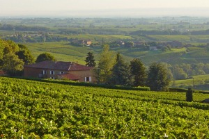 Rural Vonnas: Local vineyards  supply some of the 130,000 bottles of wine in Restaurant George Blanc's cellar.