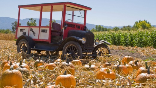 Bountiful: A Santa Ynez Valley pumpkin farm.