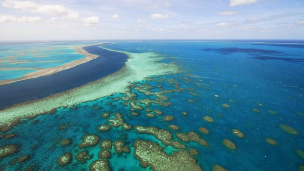 Reef in the Whitsundays region.