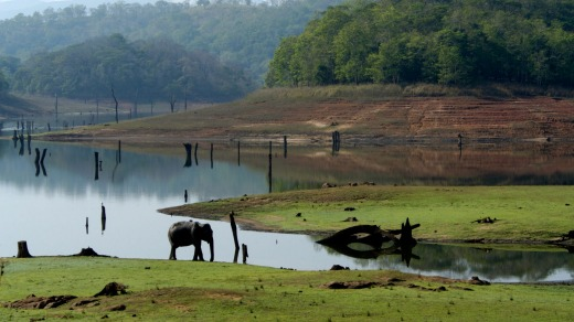 Elephants in the park by the Kabini.