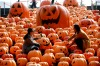 Visitors pose for photos in an installation of 500 pumpkin lights to mark the Halloween in Shenyang, Liaoning province, ...