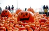 An installation of 500 pumpkin lights to mark the Halloween in Shenyang, Liaoning province, China.
