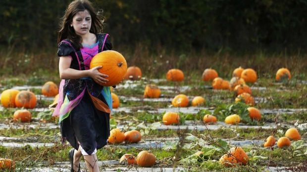 A girl carries her pumpkin at Tulleys Farm pumpkin patch during their Halloween festival, near Crawley in southern England.