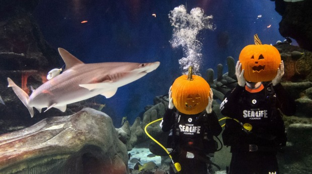 Divers hold their pumpkins after carving them in a fish tank during a photo call to mark Halloween season at the London ...