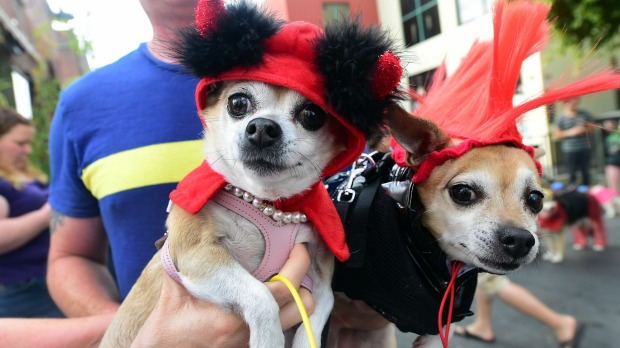Pet owners take their dogs dressed in Halloween costumes for a walk in the Growl-a ween Parade through Old Town in ...