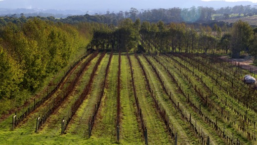 Sweeping view: The Tamar Valley Vineyard.