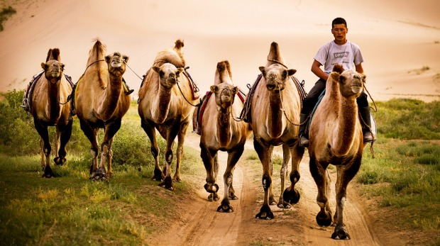 This photo was taken last July at Khongorun Els in the heart of the Gobi Desert, Mongolia. I had recently climbed the ...