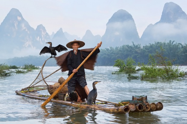 A fisherman with cormorants on the river Li.