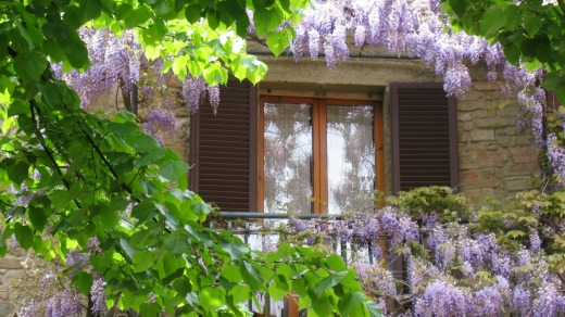 Framed balcony: Wisteria softens a stone building.