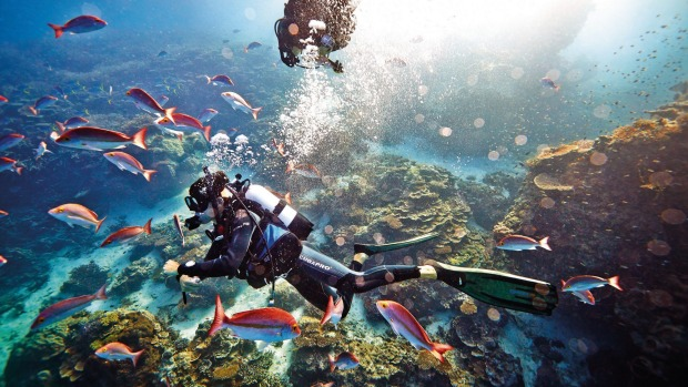 Underwater spectacular: Heron Island, the Great Barrier Reef.