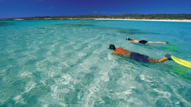 Home to hundreds of fish, coral and crustacean species: Ningaloo Reef, Western Australia.