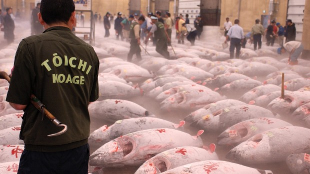 Seafood platter: Frozen tuna laid out before auction at the Tsukiji fish market in Tokyo.