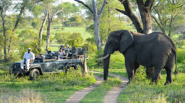 Off the beaten track: A close encounter at Londolosi private game reserve in South Africa.