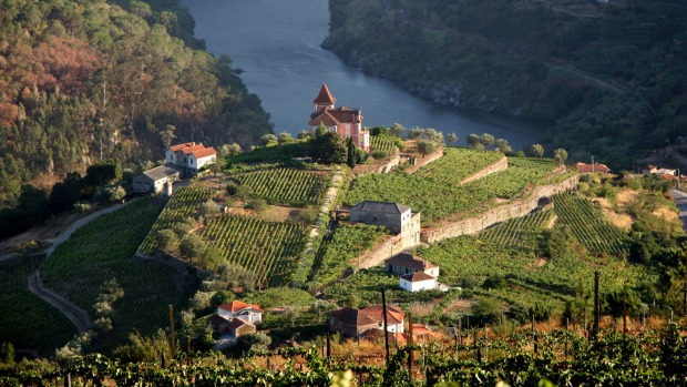 Vineyard in Douro Valley, Portugal.