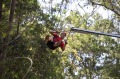 Wild ride: Three times the length of any tree-base zip line in the world: The Crazy Rider.