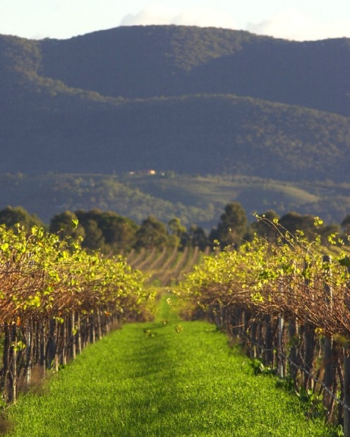 Mudgee, NSW: The home of many exquisite wineries against beautiful backdrops.