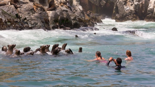 Swimming with sea lions, Palomino Islands, Callao, Lima.
