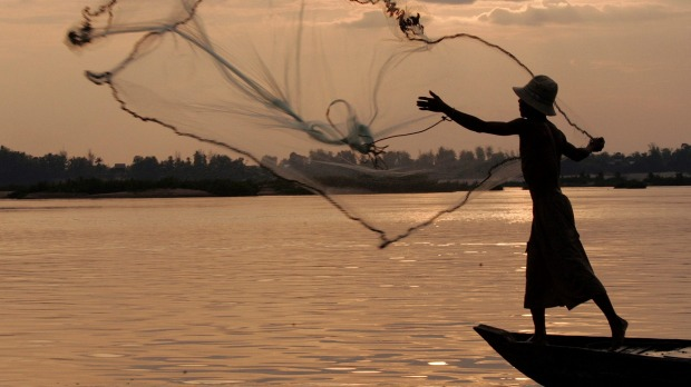The Mekong River: A fisherman casts a net on the Mekong River, home to Irrawaddy dolphins, also known as the Mekong ...