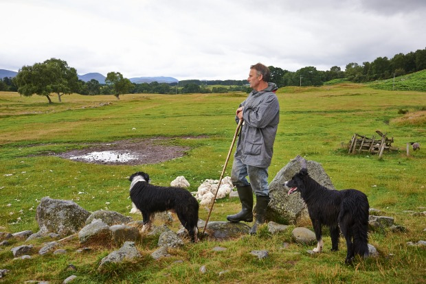 Getting your hands dirty: Go behind the scenes with a visit to a working sheep farm in the Scottish Highlands.