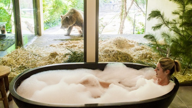 The bathroom in the Jungle Bungalow looks out into the bear enclosure.