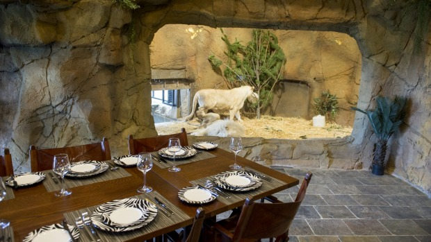 The communal dining room at Jamala Wildlife Lodge, which looks onto the lion's enclosure.