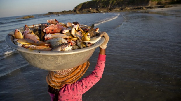 A woman carries the day'Â's catch from a fishing boat at Ngwe Saung beach, in eastern Ayeyarwaddy division, Myanmar.