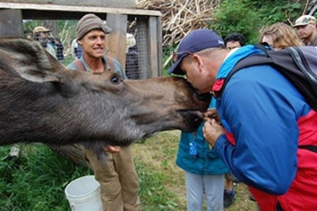 KROSCHEL CENTRE FOR ORPHANED ANIMALS, ALASKA: Film-maker Steve Kroschel takes you on an unforgettable tour around his ...