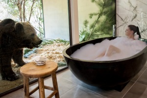 Eye contact: Thick glass separates the animals from the guests at the National Zoo's Jamala Wildlife Lodge.