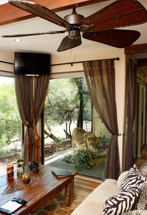 Jamala Wildlife Lodge: Only a reinforced glass window separates you from the wildlife if staying in jungle bungalows. ...