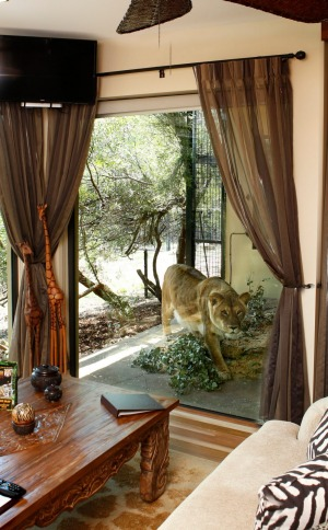 Close encounter: Guests as Jamala Lodge can watch wild animals in comfort.