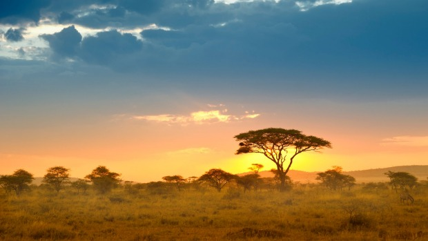 The Serengeti, Tanzania: Nothing can take away from the beauty and romance of watching a slowly setting sun and ...