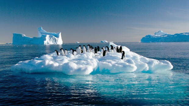 Adelie penguins drift on ice floe in the Southern Ocean off the Australian Antarctic Territory.